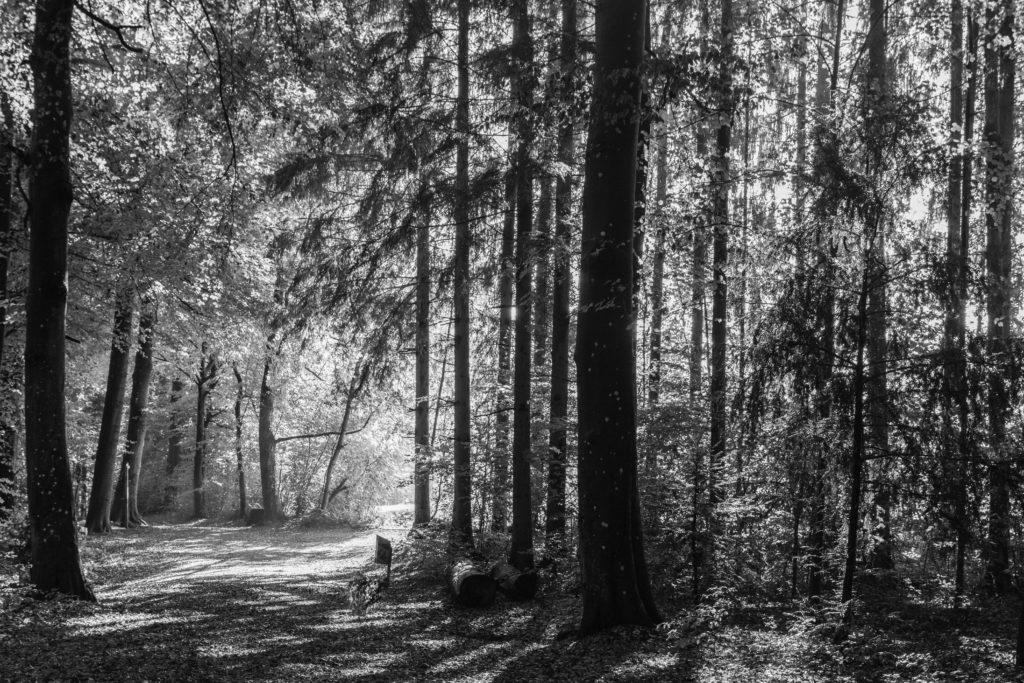 Waldspaziergang am Bruehlberg