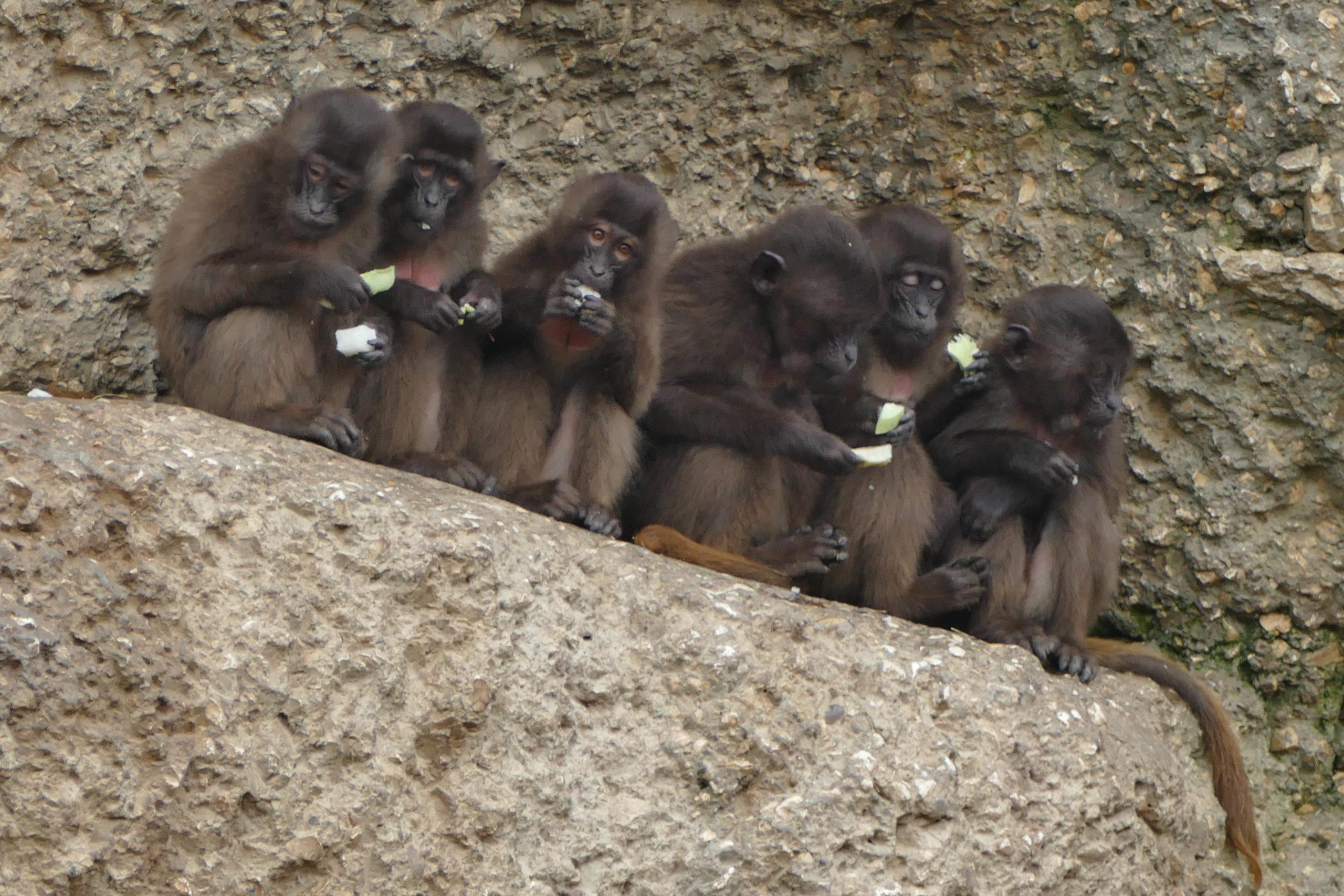 Affenfütterung 2